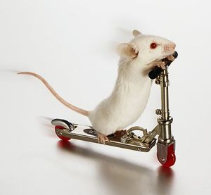 white-mouse-on-skate-board.jpeg